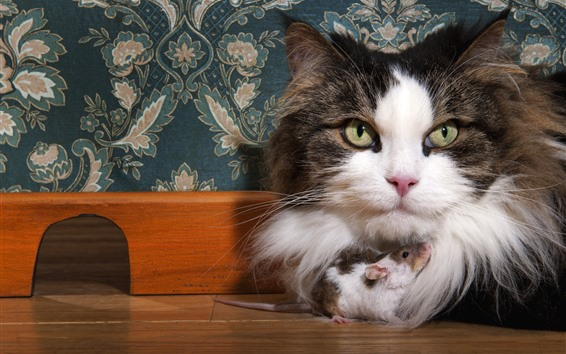 Wallpaper Furry cat and mouse are friends