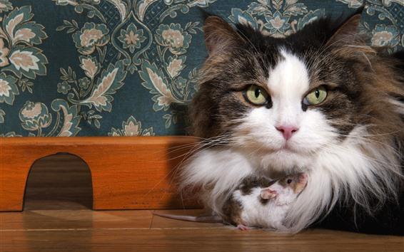 Fondos de pantalla El gato peludo y el ratón son amigos.