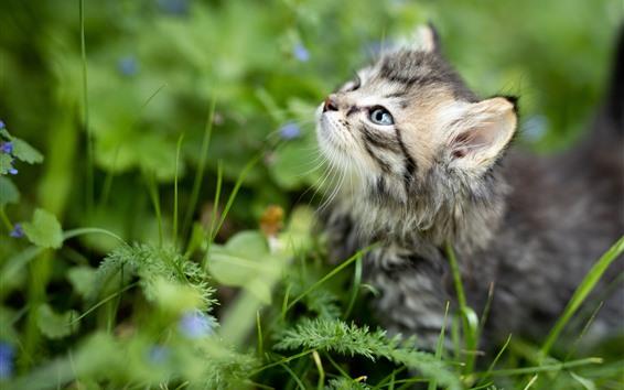 Fondos de pantalla Mirada de gatito peludo, plantas, fondo verde