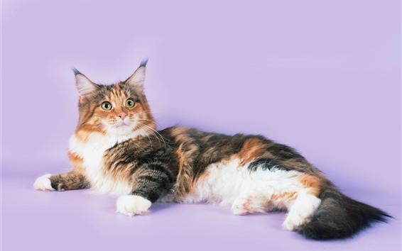 Обои Пушистый котенок, розовый фон