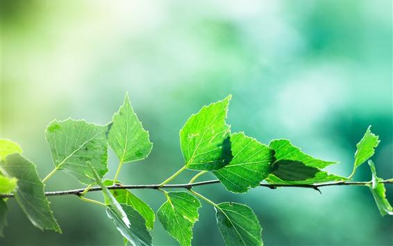 Papéis de Parede Folhas do verde, galhos, fundo obscuro