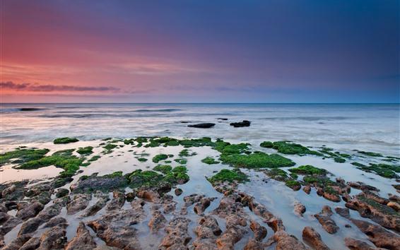Fondos de pantalla Musgo verde, arrecifes, mar