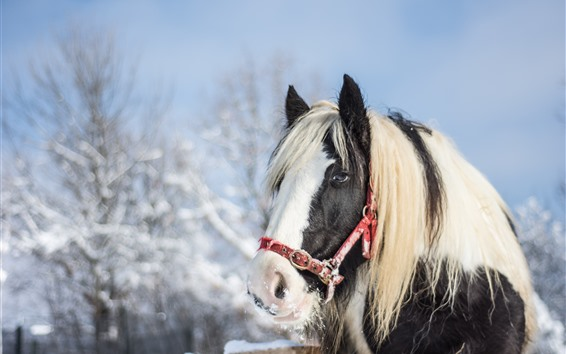 Wallpaper Horse, head, eyes, mane, snow, winter