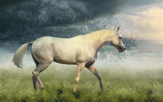 Fondos de pantalla Paseos a caballo en la pradera, árboles, niebla, nubes, mañana