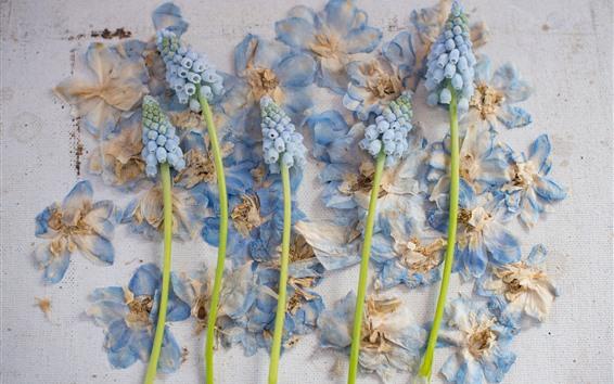 Fond d'écran Jacinthe et fleurs sèches, mur