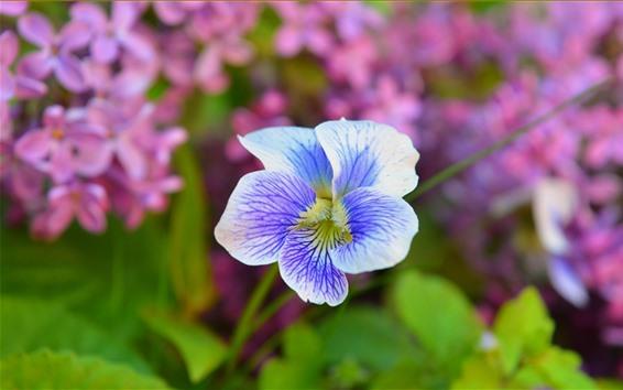 Papéis de Parede Íris, pétalas, primavera
