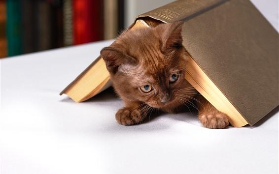 Wallpaper Kitten, book