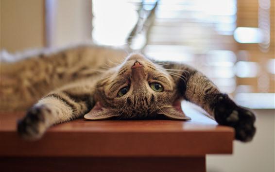 Wallpaper Lazy kitten, look, eyes, paws