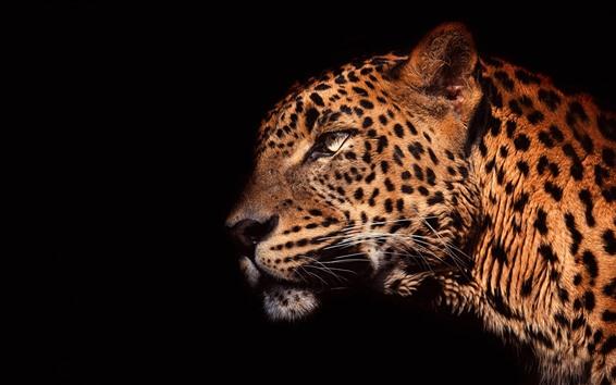 Papéis de Parede Vista lateral de leopardo, cabeça, fundo preto
