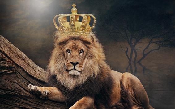 Wallpaper Lion, king, crown