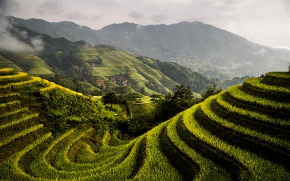 배경 화면 용성 쌀 테라스, 시골, 산, 초록, 안개, 아침