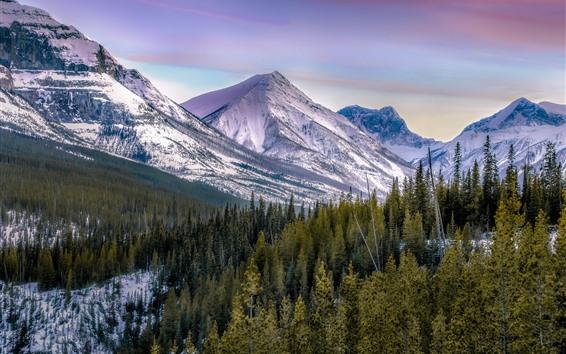 Fondos de pantalla Montañas, árboles, nieve, Paisaje invernal