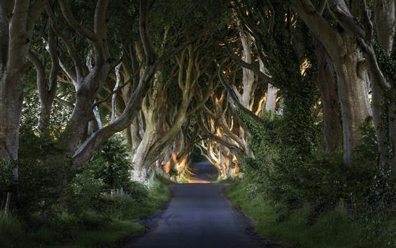 壁紙 オーク樹木、道路、トンネル