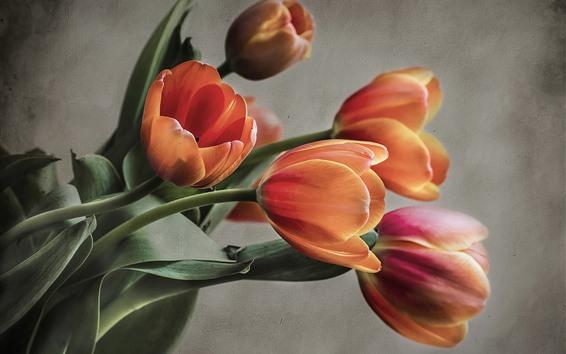 Fondos de pantalla Tulipanes de naranja, de pared
