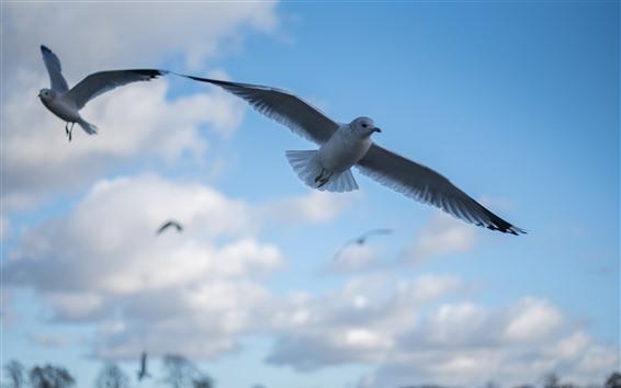 Papéis de Parede Vôo de pombo, céu, nuvens