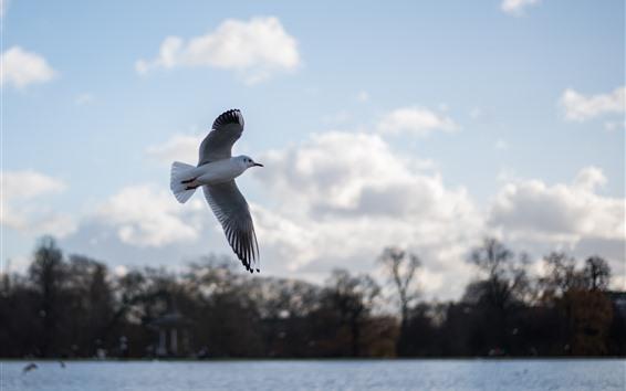 Fondos de pantalla Vuelo de paloma, alas, lago