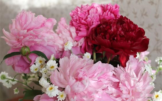 Papéis de Parede Peônias rosa e vermelhas flores, pétalas