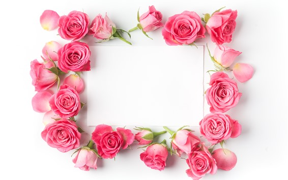 Fondos de pantalla Rosas rosas, papel blanco.