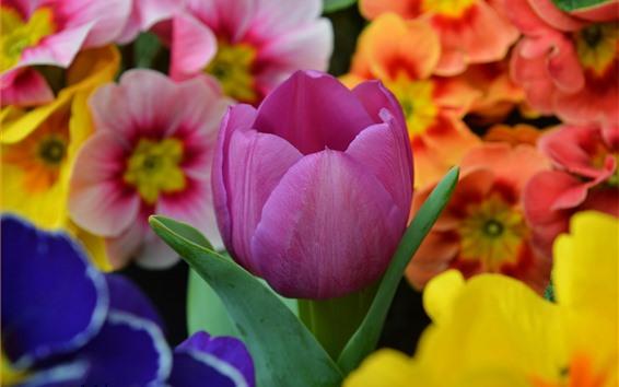 Fondos de pantalla Tulipan morado y flores naranjas.
