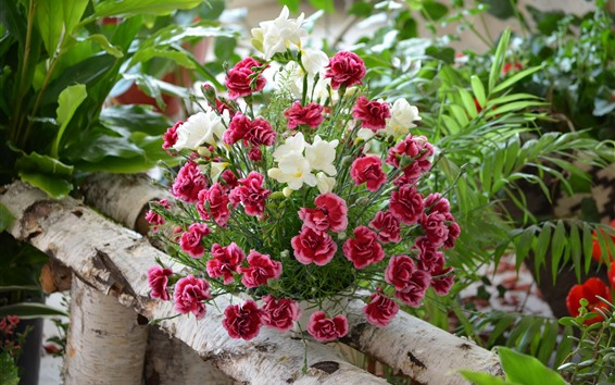 Wallpaper Red carnation and white flowers, bouquet