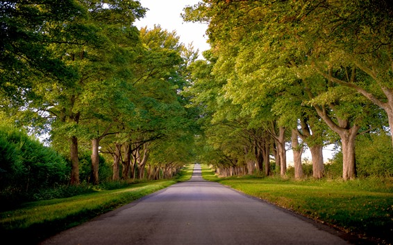 Fondos de pantalla Camino, arboles, verde, verano