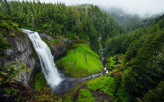 Wallpaper Salt Creek Falls, waterfall, trees, green, USA