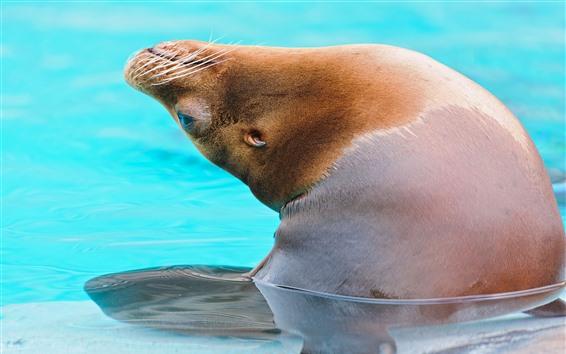 Papéis de Parede Leão de mar para fora água