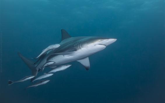Fondos de pantalla Tiburón y pequeños tiburones