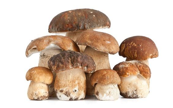 Fond d'écran Quelques champignons, fond blanc