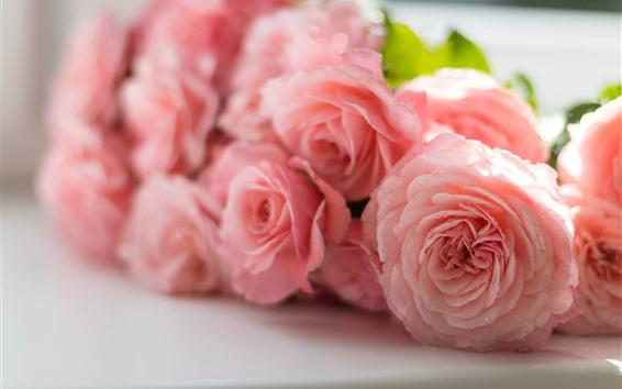 Papéis de Parede Algumas rosas cor-de-rosa, pétalas, gotas de água, nebuloso