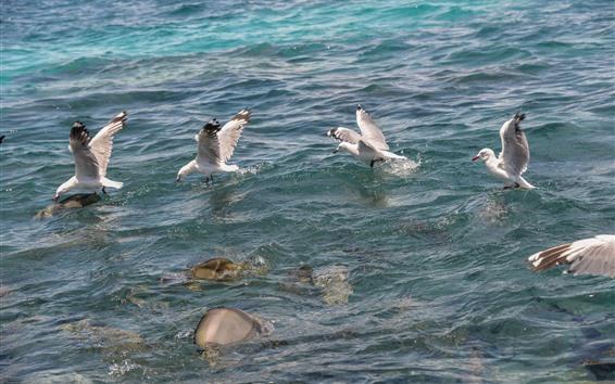 Papéis de Parede Algumas gaivotas, mar, água