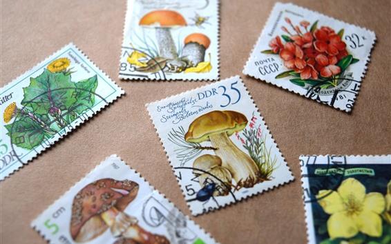 Fondos de pantalla Algunos sellos, setas, flores.