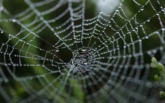 Papéis de Parede Teia de aranha, gotas de água