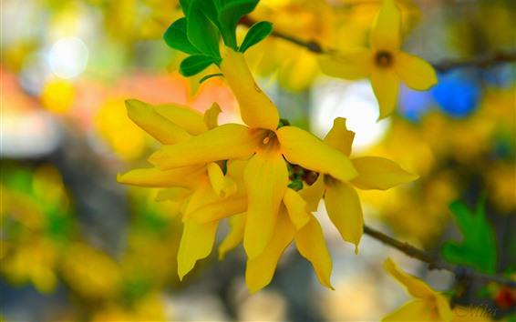 Fondos de pantalla Primavera, flores amarillas, brujería