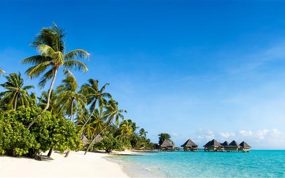 Papéis de Parede Cenário tropical da natureza, praia, mar, palmeiras, cabanas, recurso, céu azul