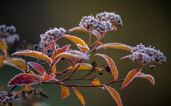 Fondos de pantalla Ramitas, hojas, heladas, invierno