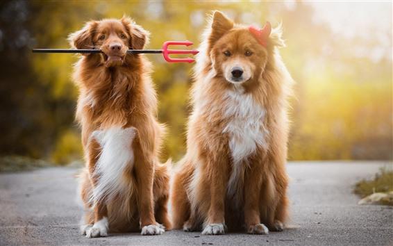壁紙 2匹の犬、フォーク