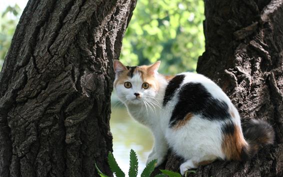 Papéis de Parede Olhar do gato branco para trás, árvore