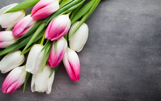 Fondos de pantalla Pétalos de rosa blanco tulipanes, fondo gris