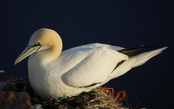 Обои Белая чайка отдыхает
