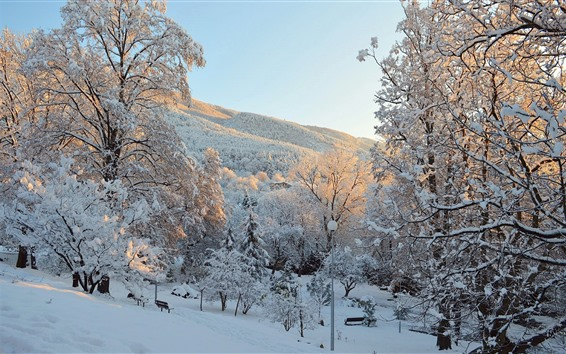 Wallpaper Winter, snow, trees, park