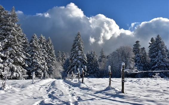 Fondos de pantalla Invierno, nieve espesa, valla, árboles, frío