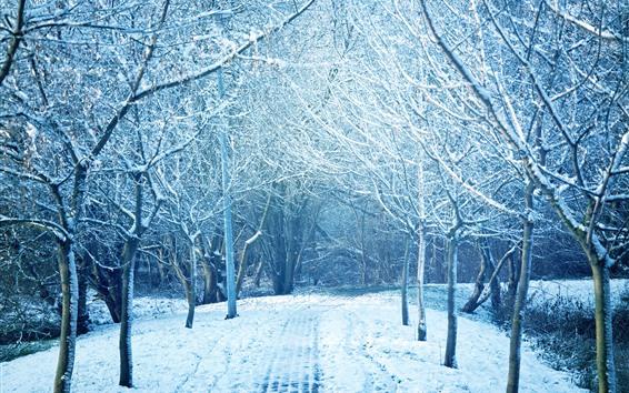 Wallpaper Winter, trees, snow, park, path