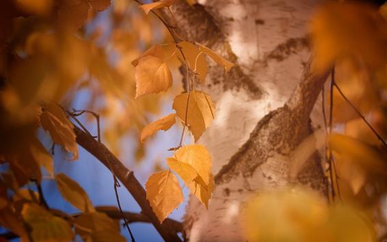 Wallpaper Yellow leaves, tree, hazy
