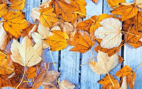 壁紙 黄色のカエデの葉、木製のボード