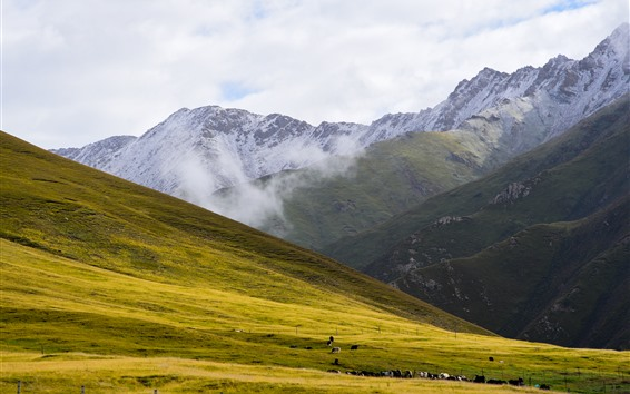 Fondos de pantalla Animaqing Snow Mountain, prado, nubes, niebla, pastoreo, China