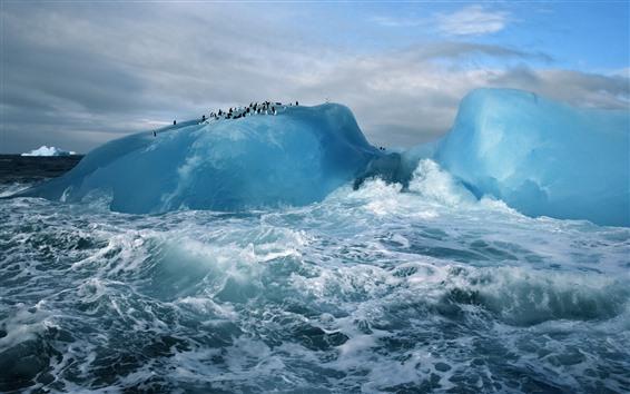 Fondos de pantalla Ártico, icebergs, pingüino, mar, olas