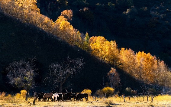 Papéis de Parede Outono, árvores, cavalos
