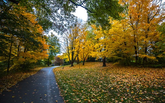 Wallpaper Autumn, trees, yellow leaves, footpath, park