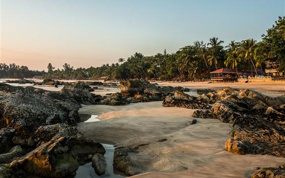 Wallpaper Bali, beach, palm trees, sands, tropical